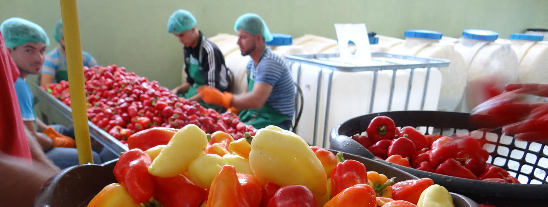 Përkrahje për përpunimin e perimeve produkt vendor