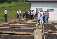Exchange Visit Informs and Inspires Kosovo Farmers to Cultivate Medicinal Aromatic Plants