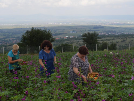 Women Farmers Increasingly Interested in Medicinal Aromatic Plant Cultivation