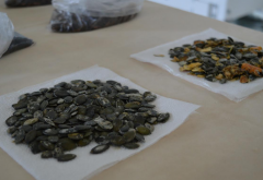 Local Producer Launches New Line of Pumpkin Seed Processing