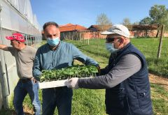 Vegetable Seedling Distribution Begins in Kosovo