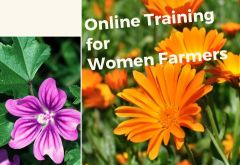Online Training for Women Farmers of Aromatic Medicinal Plants